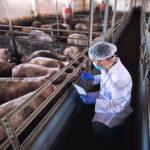 畜産を知ろう!④動物と人と環境の健康は一つ!One Healthと薬剤耐性